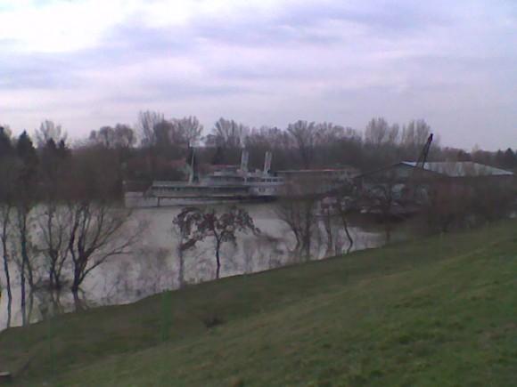 Szőke Tisza-1